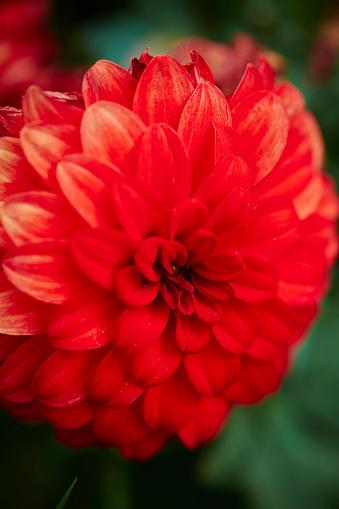 Bloem Stockfoto en meer beelden van Bloem - Plant
