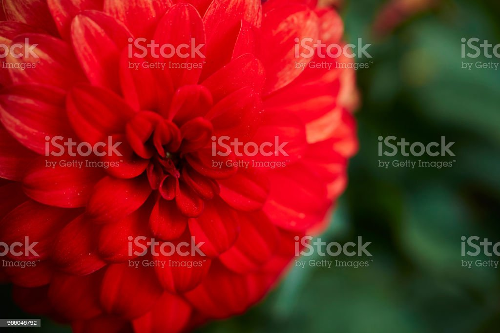 Flower - Royalty-free Beauty Stock Photo