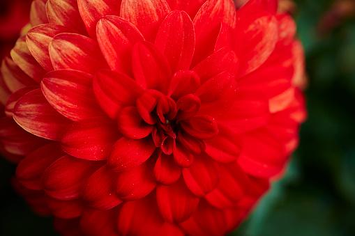 Blomma-foton och fler bilder på Blomkorg - Blomdel