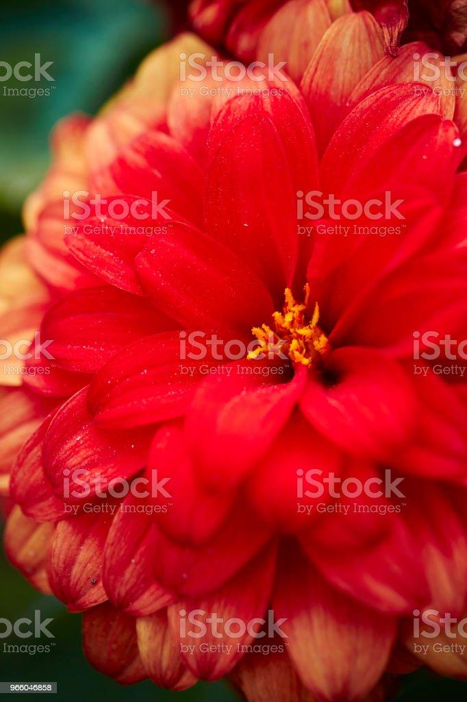 Flower - Стоковые фото Без людей роялти-фри