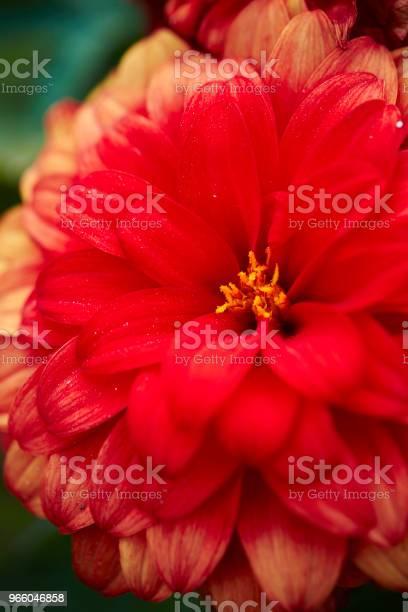 Цветок — стоковые фотографии и другие картинки Без людей