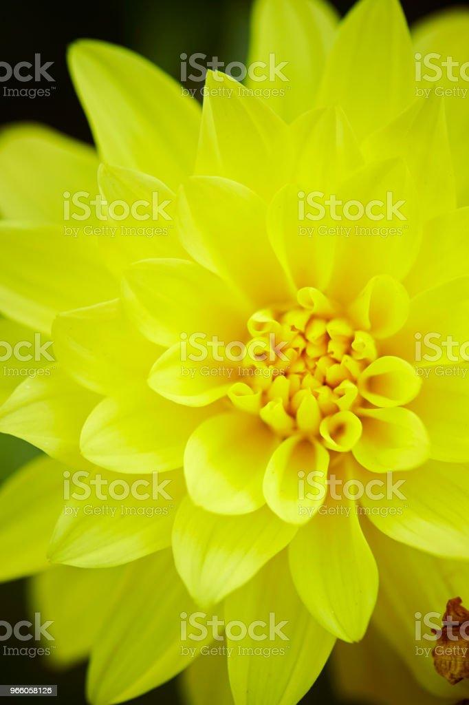 Blomma - Royaltyfri Blomkorg - Blomdel Bildbanksbilder