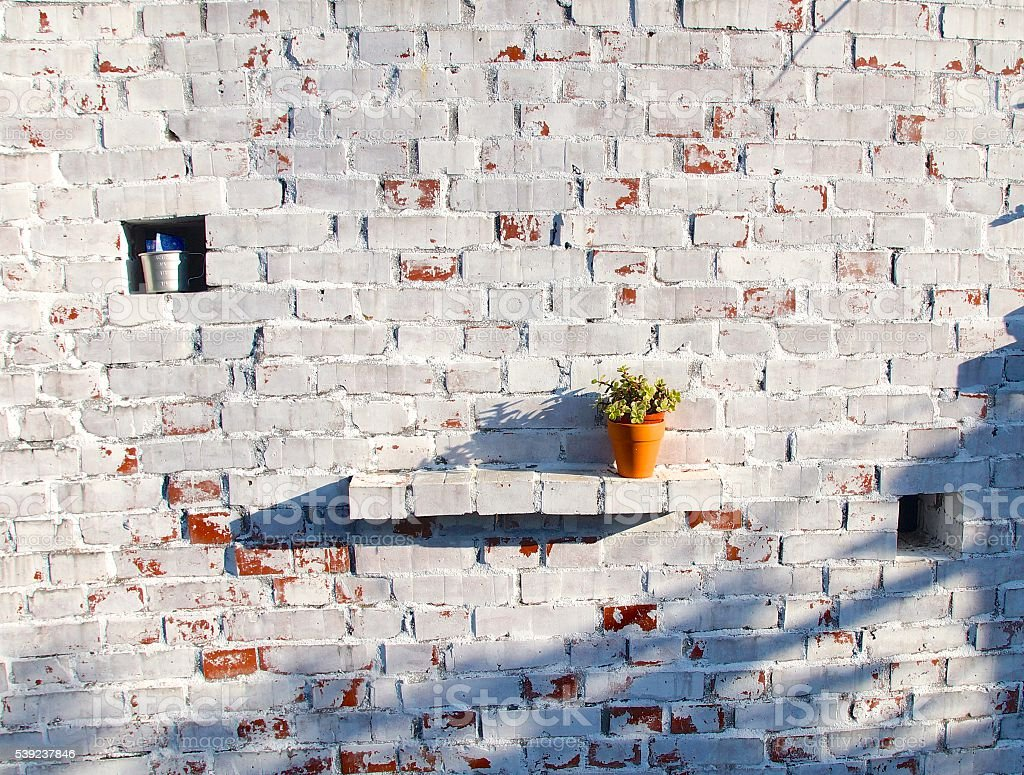 Flower pot closeup on the vintage wall in sunset royalty-free stock photo