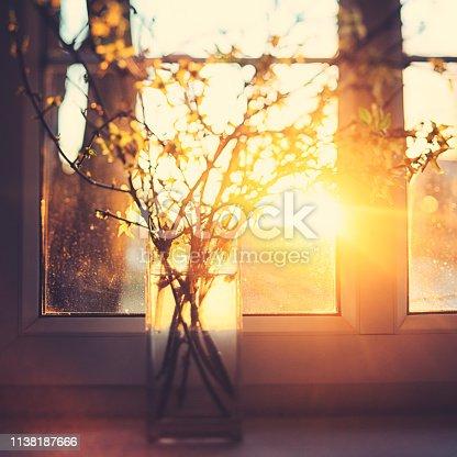 Vase of fresh yellow forsythia [genus Forsythia] by the sunny window