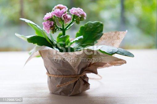 Flower pot of pink Azalea