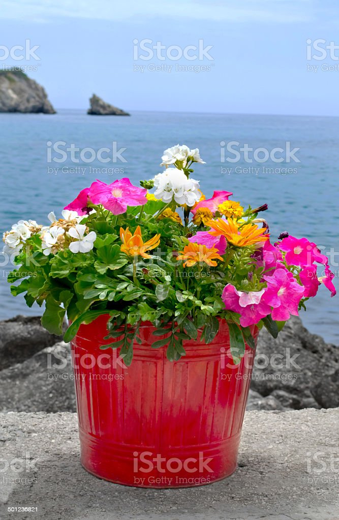 Flower Pot on Stone Wall with sea  in background stock photo