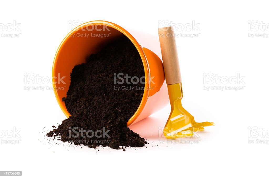 flower pot royalty-free stock photo