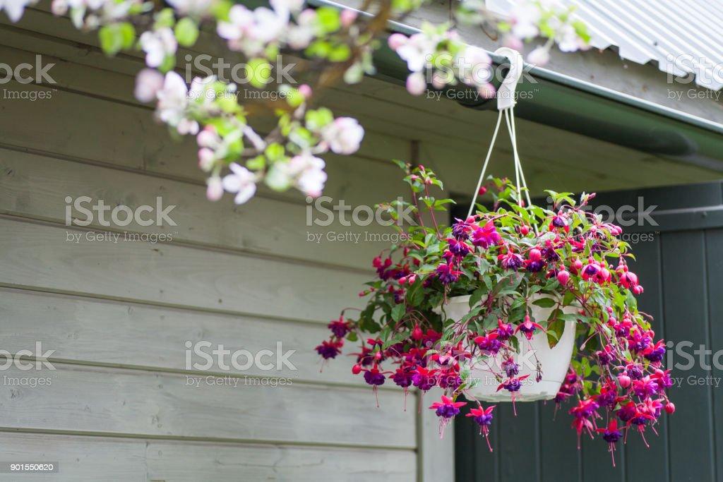 Flower pot – Foto