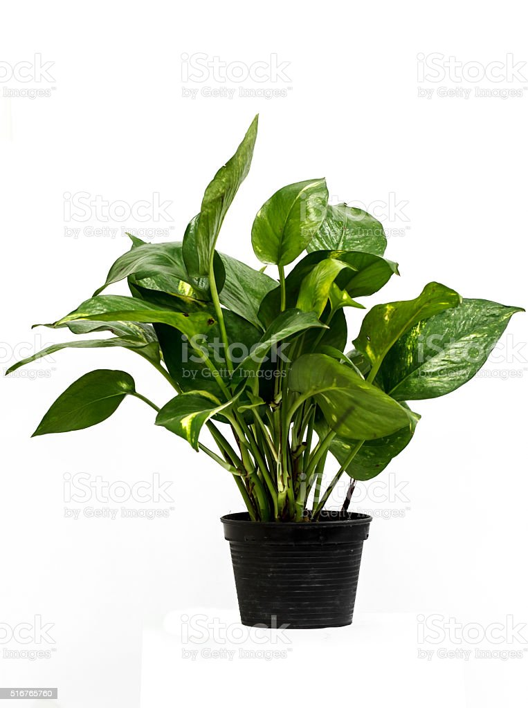 Flower pots green stock photo