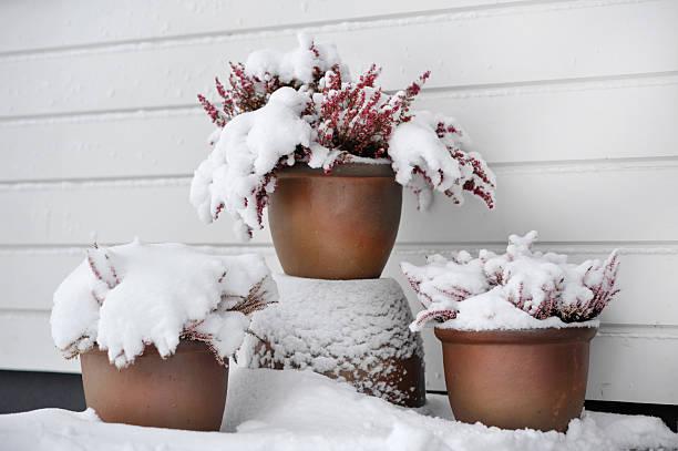 Flower pots in snow stock photo