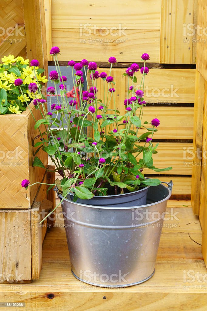 Flower pots in vase on wooden background stock photo