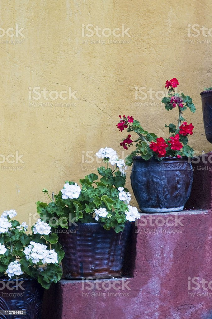 Flower pots on stairs royalty-free stock photo