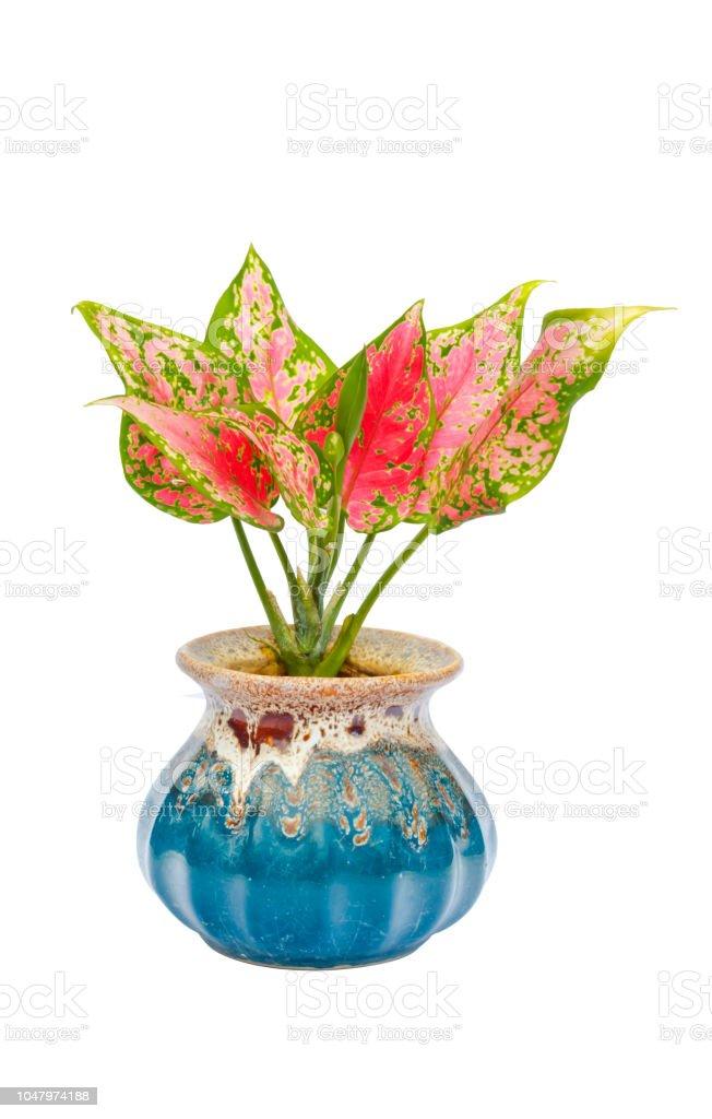 Flower pots on white background stock photo