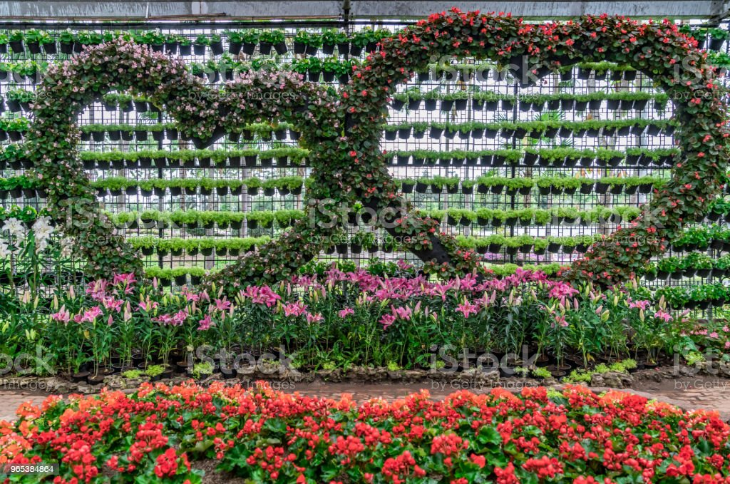 Flower pots wall zbiór zdjęć royalty-free