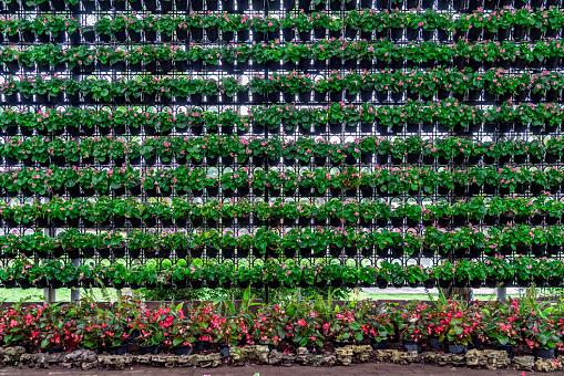 꽃 냄비 벽 0명에 대한 스톡 사진 및 기타 이미지