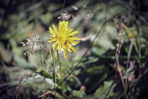 Flower power picture id1304004265?b=1&k=6&m=1304004265&s=612x612&w=0&h=eidvzypsde2vnrkw9s8zekrfwm pbvcmgw3g b8ruts=