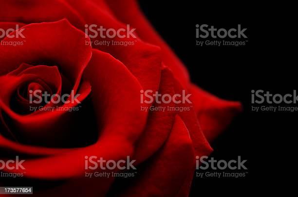 Flower red rose bud against black picture id173577654?b=1&k=6&m=173577654&s=612x612&h=caefflfrk1gotsu1bkz0hm07hu0a3zkmagshix2cwqu=