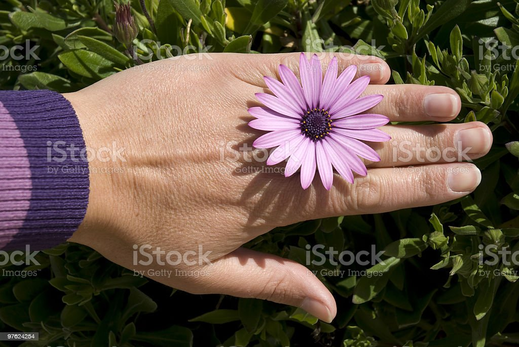 Flower ring royalty-free stock photo