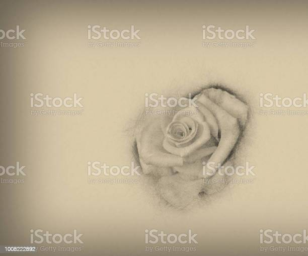 Flower rose hand drawn vintage style illustration art design picture id1008222892?b=1&k=6&m=1008222892&s=612x612&h=wnljg8y2c1je25guvfcspi634si0irum7kjmdt5voia=