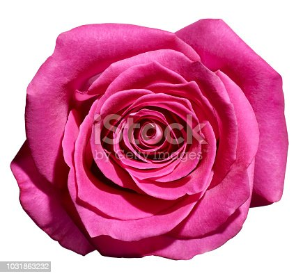867916232 istock photo flower rose petal blossom red nature beautiful background 1031863232