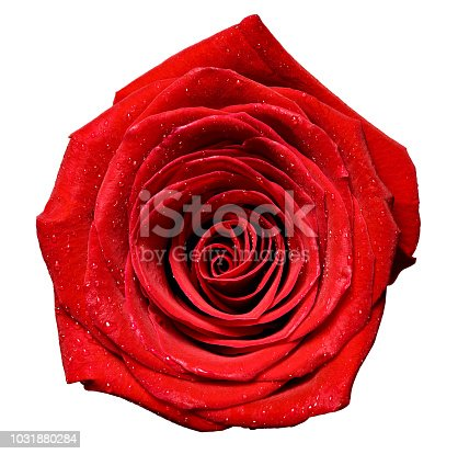 867916232 istock photo flower rose petal blossom red nature beautiful background 1031880284