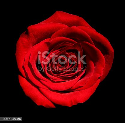 867916232 istock photo flower rose petal blossom red nature beautiful background 1067138950