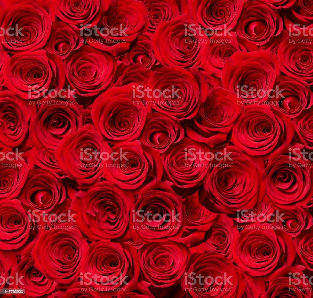 Flower rose petal blossom red nature beautiful background stock flower rose petal blossom red nature beautiful background royalty free stock photo izmirmasajfo