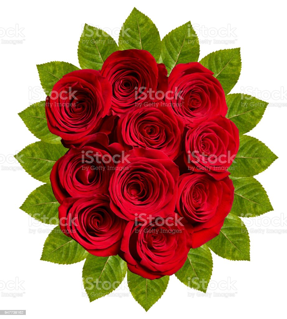 Flower Rose Petal Blossom Red Nature Beautiful Background Stock