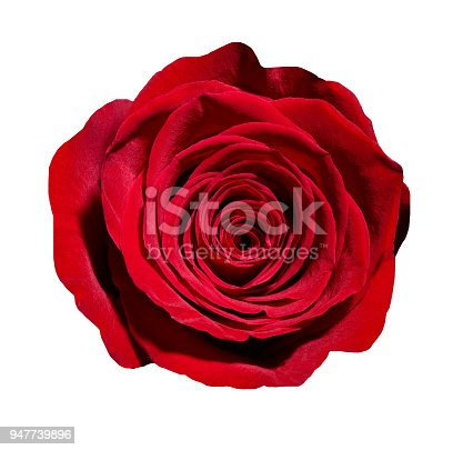 867916232 istock photo flower rose petal blossom red nature beautiful background 947739896