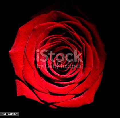 867916232 istock photo flower rose petal blossom red nature beautiful background 947748928