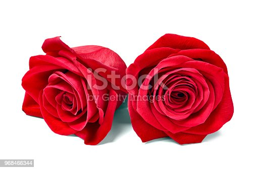 867916232 istock photo flower rose petal blossom red nature beautiful background 968466344