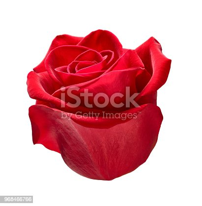 867916232 istock photo flower rose petal blossom red nature beautiful background 968466766