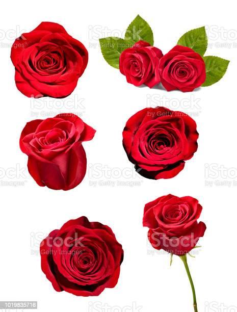 Flower rose petal blosspm background picture id1019835716?b=1&k=6&m=1019835716&s=612x612&h=ai18abbwdyuynhu bi9ynfkzbaxnwo0aw9k5o1esbec=