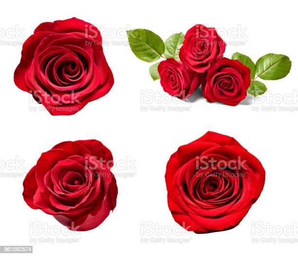 Flower rose petal blosspm background picture id961562574?b=1&k=6&m=961562574&s=612x612&h=xzbod9ajbql9pvudfnxgrtignz3p hkt4aihoxsup6a=