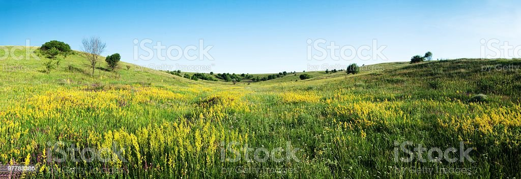 flower scene royalty-free stock photo