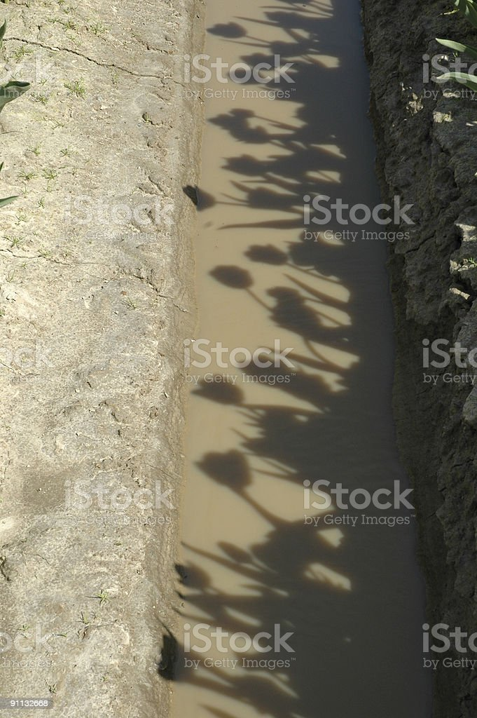 Flower shadows royalty-free stock photo