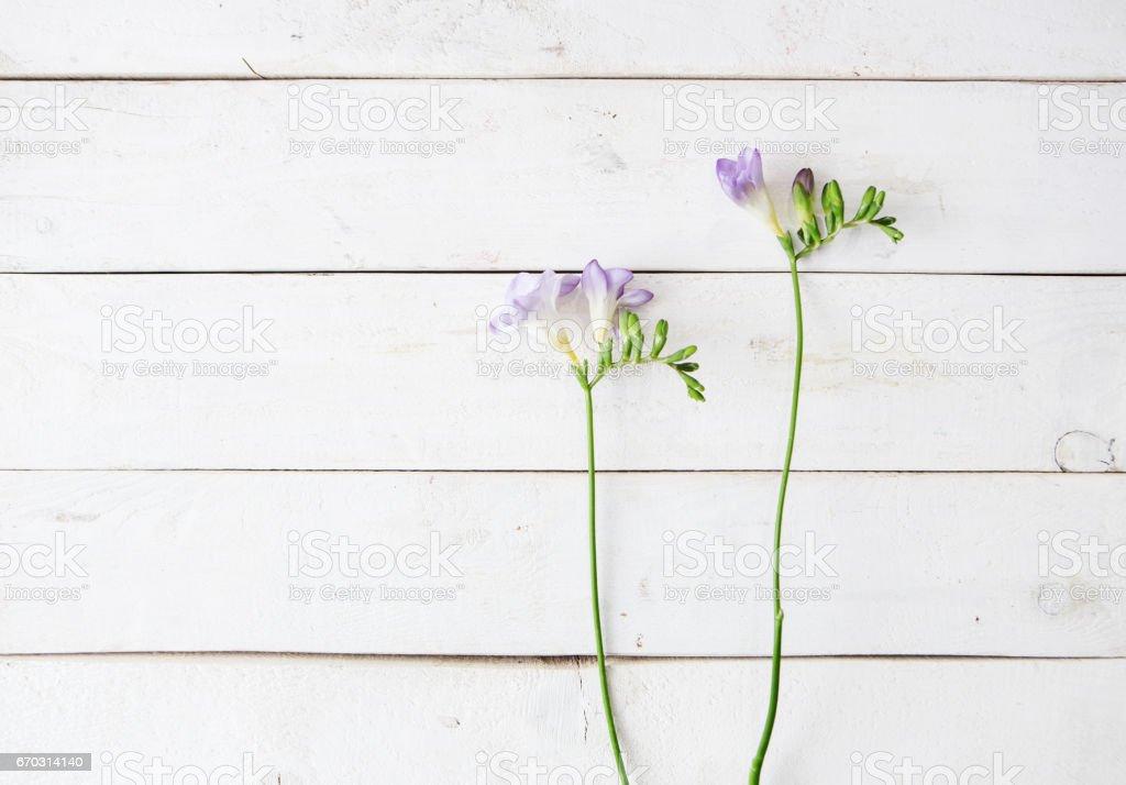 flower shop background圖像檔