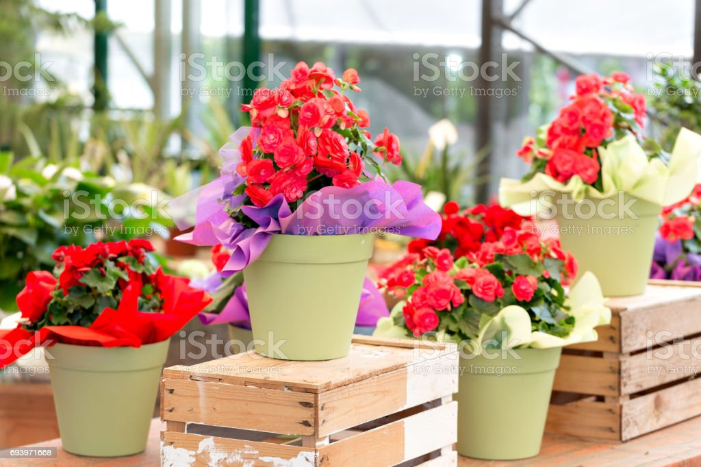 Flower Shop Outdoor Stand With Colorful Flower Pots Stock Photo Download Image Now Istock