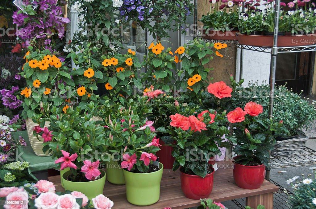 Flower shop – Foto
