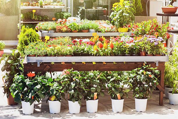 Flower shop picture id544099322?b=1&k=6&m=544099322&s=612x612&w=0&h=g3 ycrmmpdu86w6wq9 lwye5e3t6uq jgny5zqlj54w=