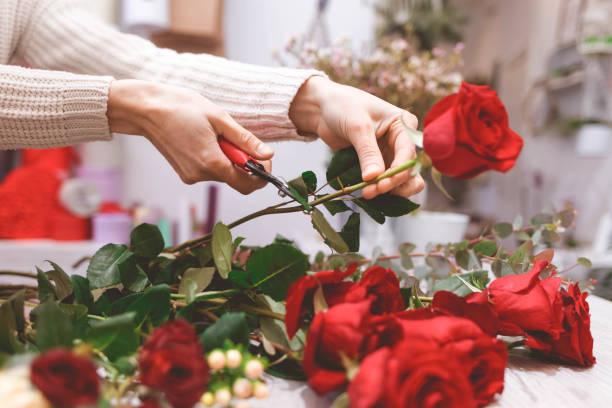 Flower shop seller prepares roses to create a bouquet by pruning them picture id1202226071?b=1&k=6&m=1202226071&s=612x612&w=0&h=l6o2mvbg4nlu5 c1fwqyl0dxjaj2fr5fg ldymoijjg=