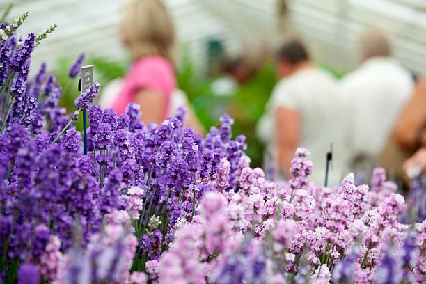 Flower Show Lavendel – Foto