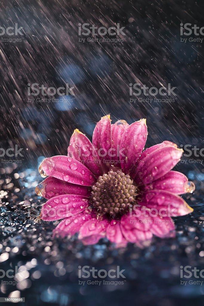 Flower showered in rain stock photo