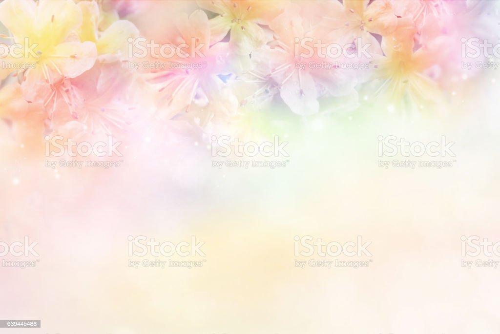 flower soft background in pastel tone for valentine or wedding
