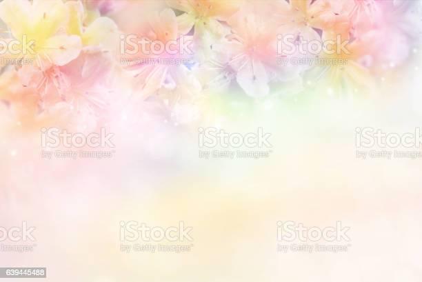 Flower soft background in pastel tone for valentine or wedding picture id639445488?b=1&k=6&m=639445488&s=612x612&h=qebyhmoeasp7duu823z5lo0 sdq55jlvonwaprsv s8=
