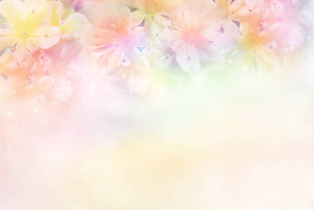 flower soft background in pastel tone for valentine or wedding stock photo
