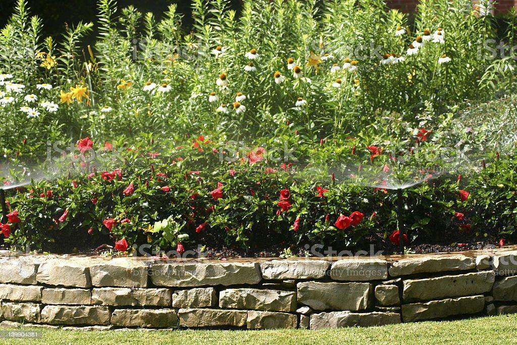 Flower Spinklers stock photo