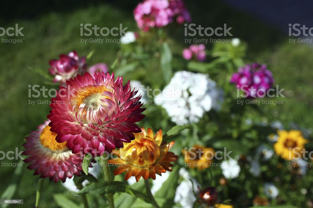 flower splash royalty-free stock photo