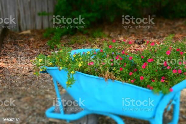Blomman Står I En Skottkärra-foton och fler bilder på Blomma