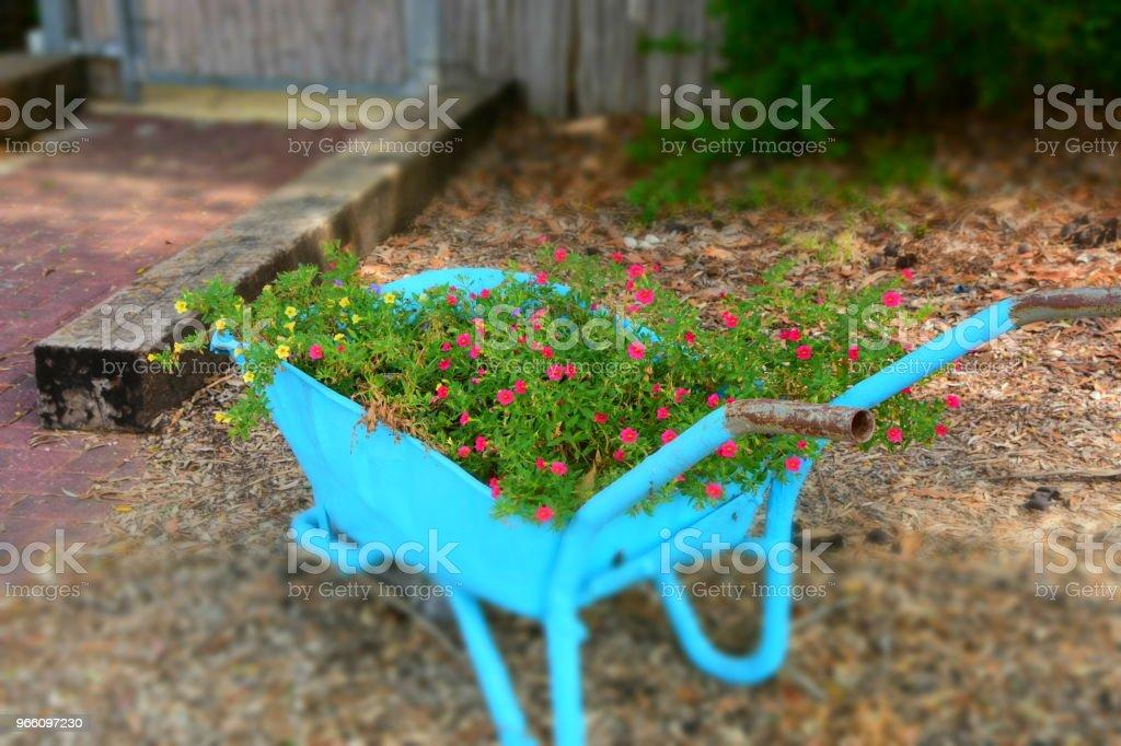 Blomman står i en skottkärra - Royaltyfri Blomma Bildbanksbilder
